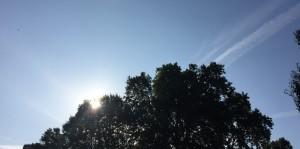 Morning_blog